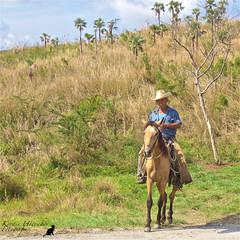 Kuba (unicorn 81) Tags: canon1024mm pferd reiter cuba kuba mann person tier repúblicadecuba republikkuba inselstaat karibik groseantillen kubarundreise2018