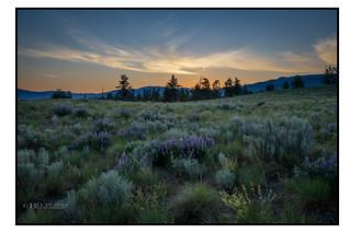 Grassland Sunrise