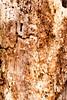 Q7 textures (B. Gohacki) Tags: pentax q q7 01standardprime alienskinexposure milc 117 textures nature spring