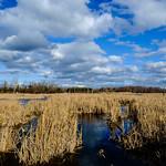 Marsh thumbnail