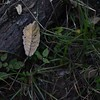 NATURE MORTE. (NIKONIANO) Tags: nature naturemorte bodegon campo outdooors
