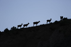 Shades (Walcher Franz) Tags: yellowstone park parks nationalpark us geyser natur nature