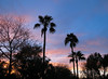 Spring Evening (zoniedude1) Tags: arizona sunset skyscape springevening weather sky sundown colorful phoenix atmosphericobservations attentiongrabbing sunsetsky valleyofthesun skyshow palmtrees silhouettes azsunset evening beauty azsky springsky view color mybackyard light skyline spring desert fanpalms backyardsunset phoenixsky southwest nature desertspring2018 canonpowershotg12 pspx9 zoniedude1 earthnaturelife
