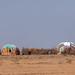 A somali hut called aqal in the desert, Dhagaxbuur region, Degehabur, Somaliland