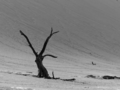 Alone (Red Cathedral uses albums) Tags: redcathedral aztektv sony alpha mirrorless a6000 sonyalpha wanderlust digitalnomad hiking protest activism alittlebitofcommonsenseisagoodthing travellingphotographer travel namibia naukluft etosha nationalpark africa wildlife animal abstract dune hill dunes desert thebigfive blackandwhite zwartwit noiretblanc