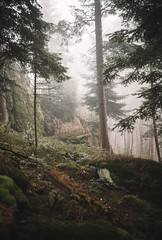 Tranquility (desomnis) Tags: forest woodland woods bohemianforest böhmerwald trees mist misty moody nature natur fog foggy bokeh 5d canon5dmarkiv canon5d desomnis sigma35mmf14art sigma35mmf14 sigma35mm sigma35mmart 35mm