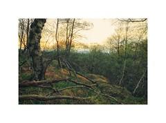 Der Spuk ist vorbei (der Winter) (linke64) Tags: thüringen deutschland germany bäume baum himmel frühling fachwerk wald grün abend
