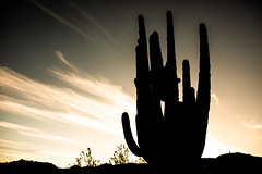 Roll the Credits (Thomas Hawk) Tags: america arizona bartlettlake cavecreek saguaro tontonationalforest usa unitedstates unitedstatesofamerica yellowcliffs cacti cactus desert silhouette sunset rioverde us fav10 fav25