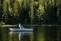 Waiting for the bite (mysticislandphoto) Tags: fishing flyfishing trout rainbow cariboo lake