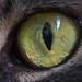 Kidogo's eye