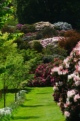Rhododendrons at Riverhill Himalayan Gardens (Jayembee69) Tags: riverhill himalayangardens riverhillhimalayangardens may spring garden gardens kent england english britain british gb uk unitedkingdom touristattraction attraction visitorattraction rhododendron sevenoaks