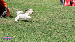 _DSC0554 (SeverX9) Tags: sony alpha 6500 70200gf4 dog run