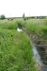 Rainham Marshes (Loz Flowers) Tags: london londonloop londonloopwalktwentyfour rainham rainhammarshes