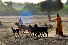 Morning Duty (vijvijvij) Tags: jaisamer khurivillage desert thardesert thar