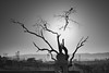 Tree of Life and Death (*trevor) Tags: asia fujifilm india pushkar travelphotography xt2 bird blackandwhite camels tree