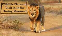 Best Wildlife Sanctuaries in India to Visit in Monsoon (davidjames216) Tags: wildlife sanctuaries india monsoon heritageindiaholidays tour packages