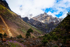 Yumthang Valley, Sikkim, India (CamelKW) Tags: sikkimindia2018 yumthangvalley sikkim india in