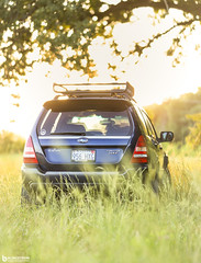 Bright beams and tall grass (Blingstrom) Tags: bokeh sunshine sunset forester grass tallgrass subaru boost 135mm f2 canon car