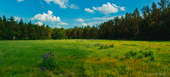 Barneführerholz / Osenberge II (janmalteb) Tags: deutschland germany hatten sandkrug osenberge barneführerholz oldenburger land country countryside summer green blue sky clouds meadow grass trees panorama sunny wide angle canon eos 77d tamron 18200 mm