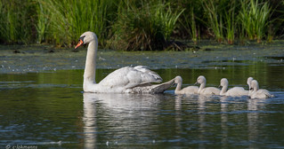 Familienausflug