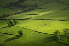 Green fields of the Peak District (Keartona) Tags: hayfield derbyshire england english green fields patchwork landscape trees peakdistrict walls stonewall sunlight shadows beautiful agriculture slope