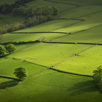 Green fields of the Peak District thumbnail