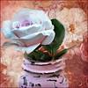 Springtime (Aránzazu Vel) Tags: spring springtime primavera flor fiore flower textura texture rosa rose