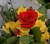 Bouquet - Red Rose Center (Scott 97006) Tags: flowers bouquet pretty petals colorful fresh buttercup pussywillow tulip flower