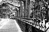 Parque San Francisco, León (KRAMEN) Tags: parque león nieve árbol valla