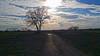 RAGOGNA. LA VIA DEI CAMPI. (FRANCO600D) Tags: ragogna sandanieledelfriuli campagna pianura albero tree fvg friuli friuliveneziagiulia italia italy italie italien bellitalia natura cielo sky nuvole clouds controluce viottolo sentiero paesaggio landscape smartphone samsung note4 franco600d