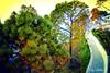 Routes (cOlorZas) Tags: cover wallpaper katra jammu india south asia trees colourfull nature natural morning routes beautifull sunshine green sunlight