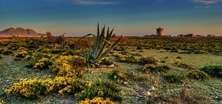 Primavera en El Cabo