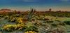 Primavera en El Cabo (zapicaña) Tags: zapigata cabodegata landscape paisaje flor flower flores almeria andalucia españa europa europe sky spain cielo