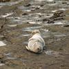 Time for a snooze (pshep1) Tags: seal rocks coastline stmarysisland wildlife northtyneside northsea whitleybay unitedkingdom greatbritain