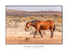 Wild horse in outback Australia (sugarbellaleah) Tags: outback remote horse wild animal equine desert dirt dry arid australia landscape countryside drought saltbush hot day outdoor nature