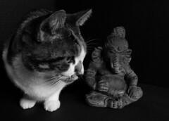 Wiki & Ganesh b/w 4 (Room With A View) Tags: stilllife ganesh wiki cat odc