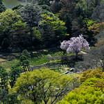 Aerial view of Koishikawa Korakuen Garden in spring (小石川後楽園)