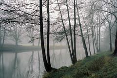 morning walk (rohabecker) Tags: leicam2 leitzsummaron2835mm kodakportra160 meinfilmlab wilhelmshaven landscape landschaft nebel fog bäume trees reflection spiegelung