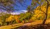 Kaleidoscope (dmunro100) Tags: autumn fall kaleidoscope colours serene calming adelaide mountloftybotanics southaustralia canon eos 80d efs1755mmf28isusm