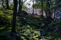 Jonan-gu (Christophe-la) Tags: jonangu plumtree flower 梅の花 梅 花 shadows kyoto japan