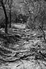 Xortiatis forest (Thanos Adamidis) Tags: xortiatis χορτιατησ forest thessaloniki greece θεσσαλονικη