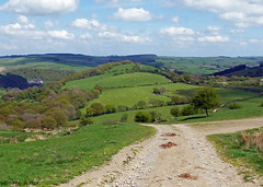 Glyndwr's Way 020 (Row 17) Tags: wales powys nationaltrail path footpath rural hills hillside lumix panasonic track tracks farmland
