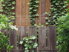 Linien (1elf12) Tags: zaun fence braunschweig friedhof cemetary germany deutschland linien lines stacheldraht