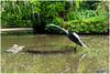 kris057 (fotoWS5720) Tags: arboretum trompenburg pond vijver bird sculpture rotterdam