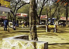 Scene at the Food court in the Surajkund Mela (Ashish A) Tags: annualfestival annualsurajkundfestival branch colorful cultural fair faircomplex food foodstalls haryana india indian mela pennant people surajkund surajkundfestival tree color festival