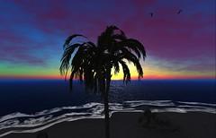 Palm (basilflor - taking clients) Tags: basil bay basilbay beach