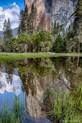 Yosemite Valley -  El Capitan Reflection In Seasonal Pond_HDR_5130_31_32 (www.karltonhuberphotography.com) Tags: 2018 california elcapitan exploring forest karltonhuber landscape meadow mirrorlike nature outdoors peaceful pond reflection seasonalpond therapeutic trees verticalimage wandering water yosemite yosemiteconservancy yosemitenationalpark yosemitevalley