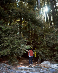 warburton redwoods-16 (brody_d_webb) Tags: warburton redwoods nature adventure victoria melbourne forest autumn olympus explore