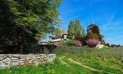 Château d'Echandens (Diegojack) Tags: echandens vaud suisse sonyrx10m3 monuments château parc histoire printemps fleuri