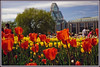 d (34) (Martin Stringer) Tags: ottawa ontario beauty flowers floral tulips tulipfestival scenics landscapes